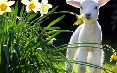 Spring Fling – Celebration for Body and Soul